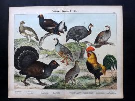 Kirby & Schubert 1889 Ptarmigan, Black Grouse, Capercaillie, Partridge, Cockerel